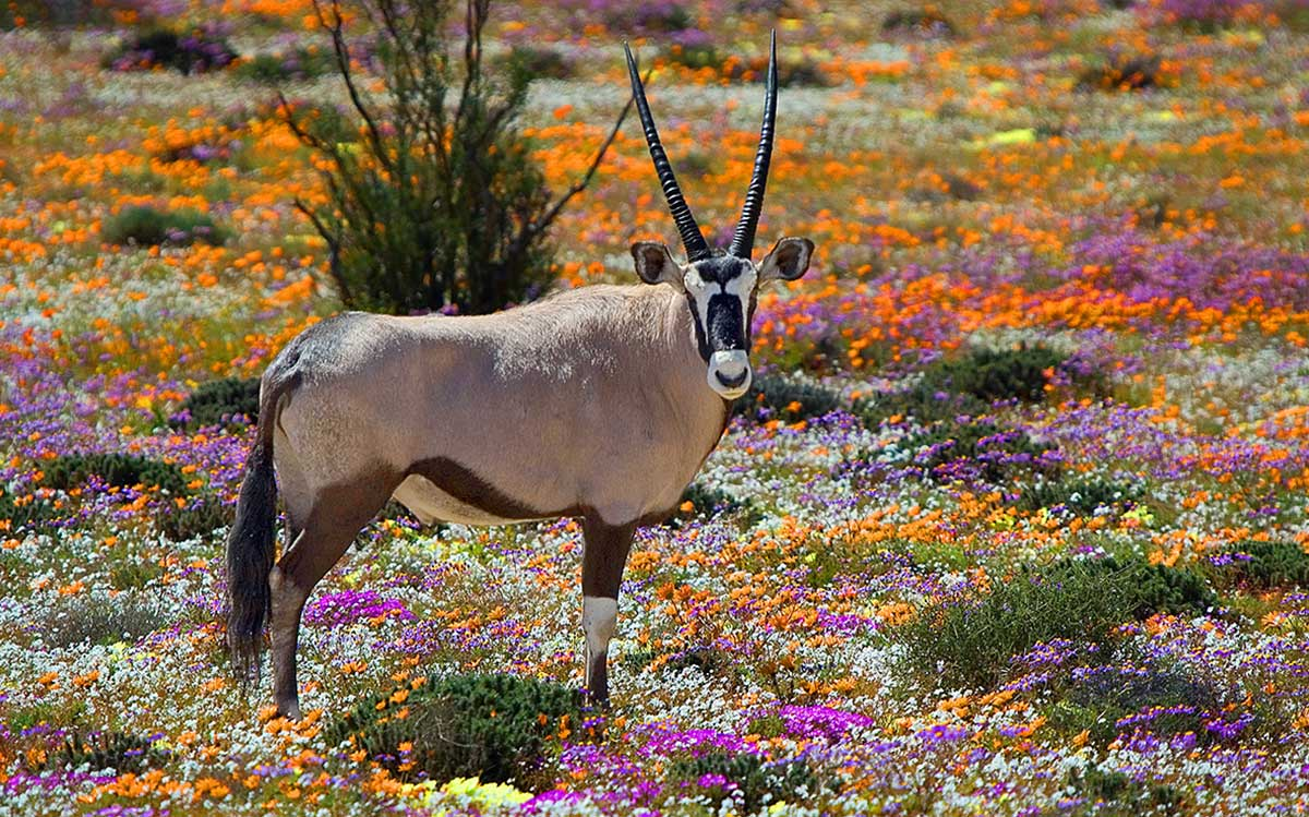 Northern Cape Holiday Travel Destination