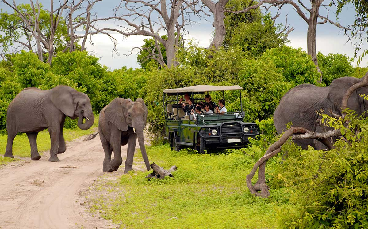 Safari Tours in South Africa
