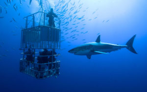 Shark Cage Diving Tours in South Africa