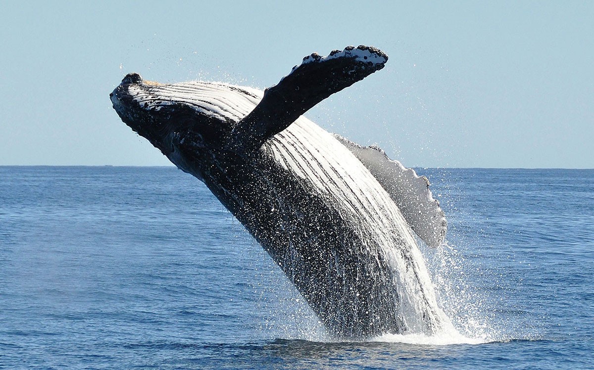 Whale Watching Tours in South Afric